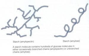Amylose:Amylopectin